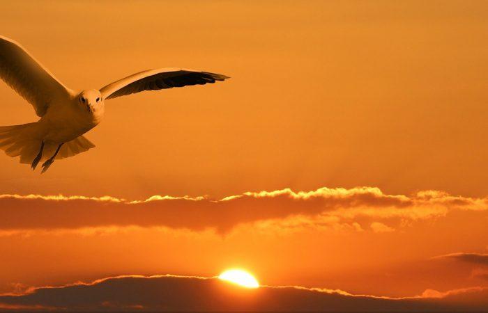 Rodzicu! Kiedyś Twojedziecko rozwinie skrzydła, odCiebie zależy czybędzie latać.