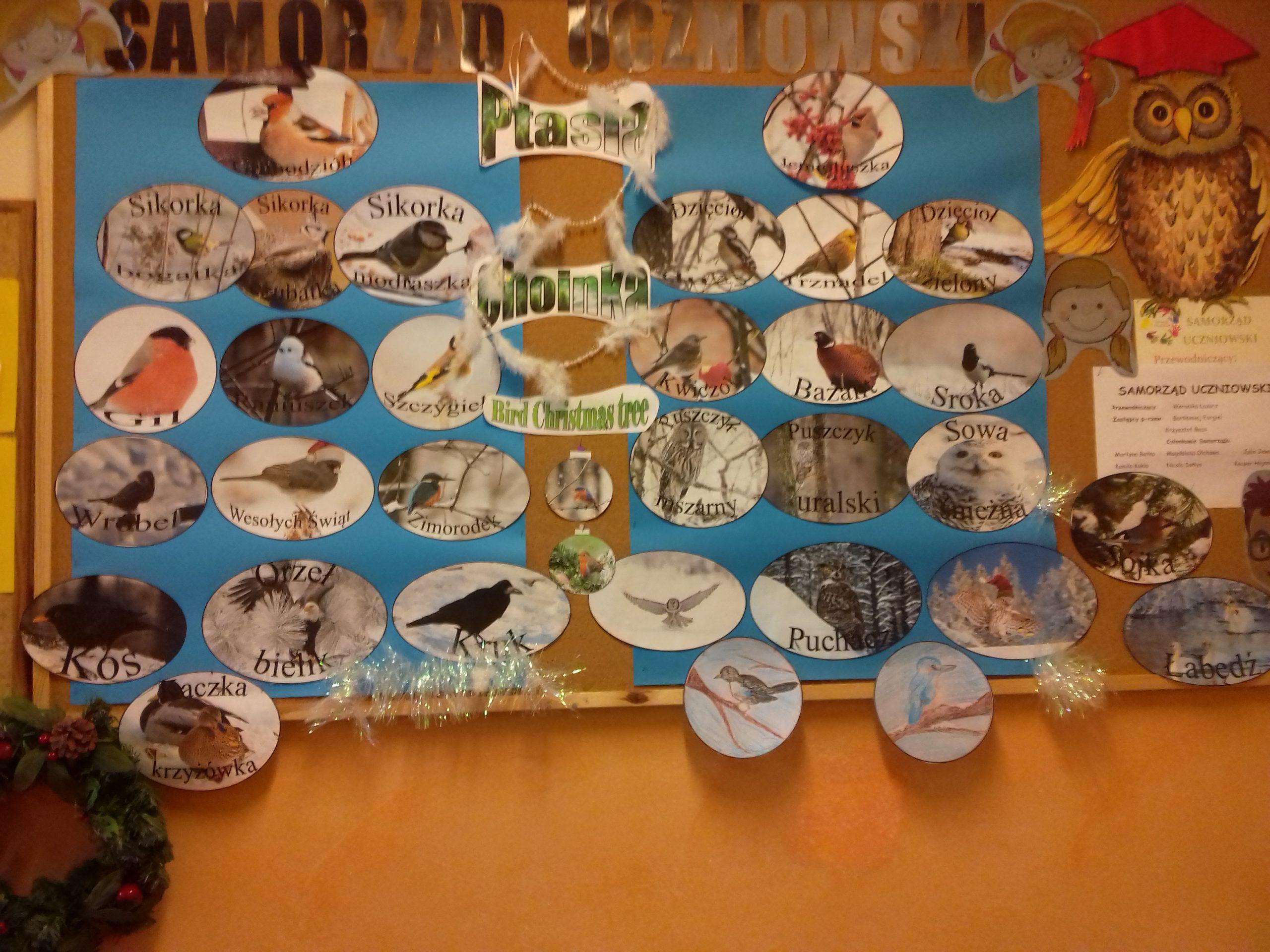 Ptasia choinka – Bird Christmas Tree